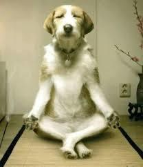 瞑想犬.jpg