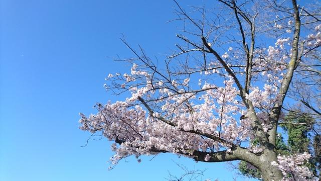 諏訪山展望台 (13).JPG