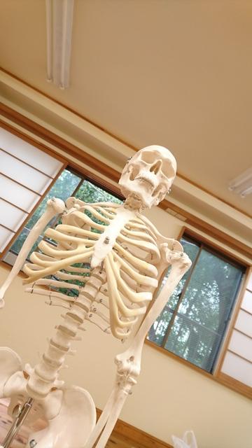 骨模型.JPG