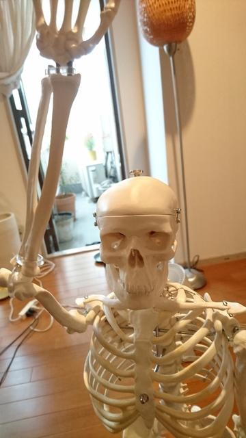 骨模型 (1).JPG